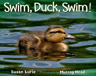 Swim Duck Swim by author Susan Lurie